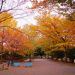 学院近くの「芦山公園」、日本の四季を味わうできる公園で、いつでも綺麗です。